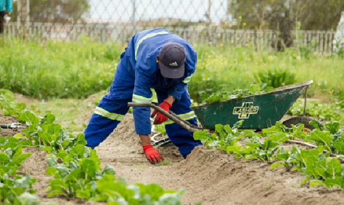 A farmer tending to vegetables in his farm Destin Africa MSC