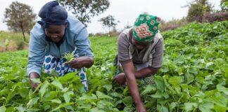Impact of COVID 19 on farmers in Kenya